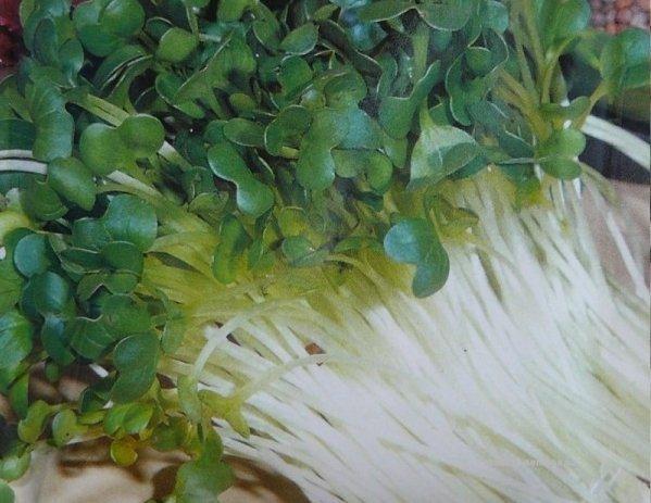 Semen� na kl��ky re�kovka 20g